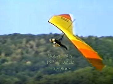 Seagull on final turn