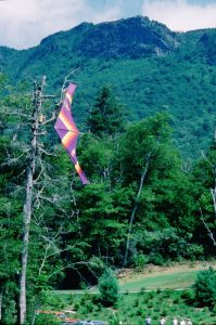 Hang glider caught in a tree at Grandfather Mountain in September 1975